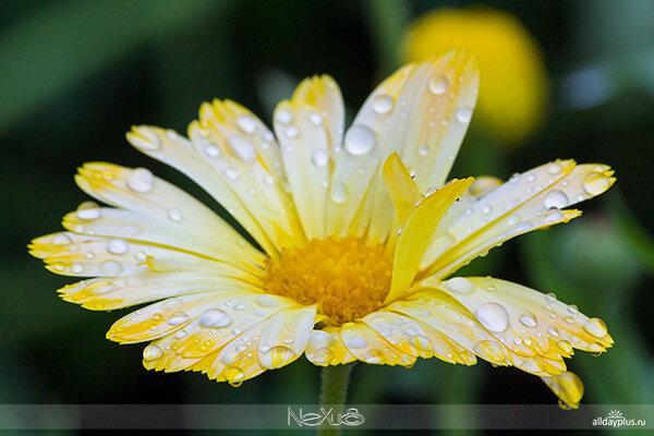 У природы нет плохой погоды, выпуск 02 | Очарование упавших капель.