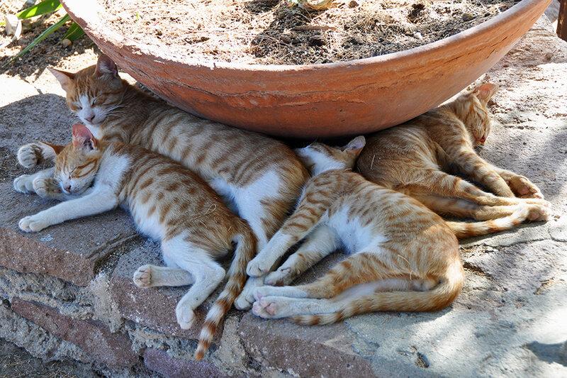 Molyvos - Sleeping Cat Family