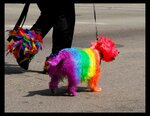 1215218269_rainbow_the_dog_by_bellykelly.jpg