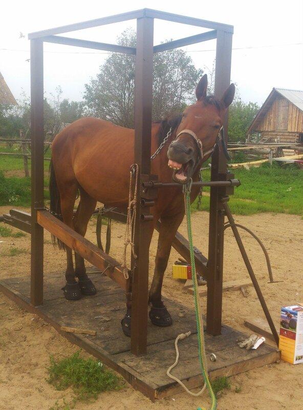 Как сделать кованного коня