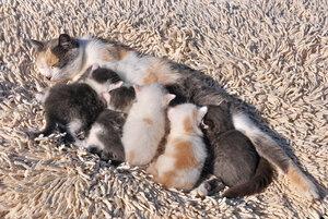 Котята выросли немножко, а есть из блюдца не хотят
