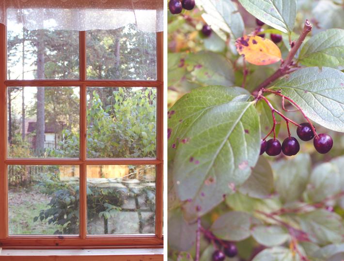 осень на даче-сосново-орехово-золотая осень
