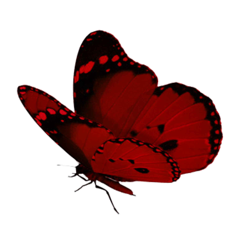 Tubes Papillons 2