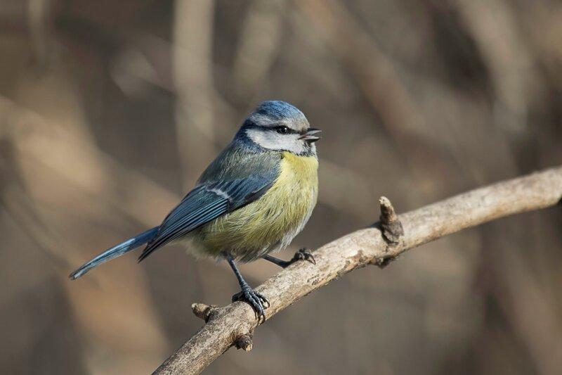 Веселей по рощам зазвенели Песни птиц на разные лады.