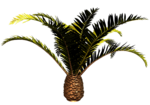 R11 - Palms - 2013 - 016.png