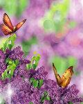 Lilac (3).jpg