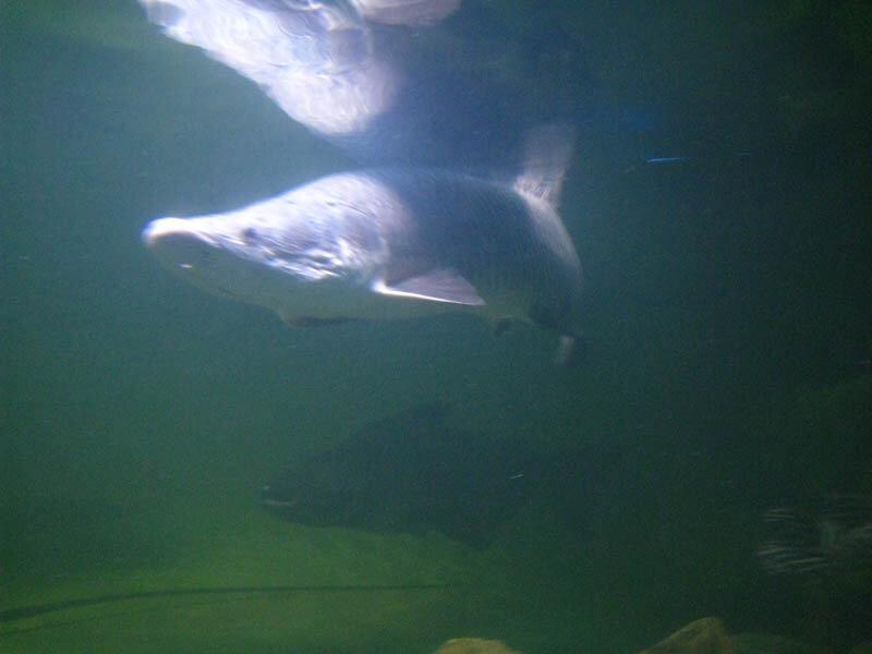 5. Рыбо