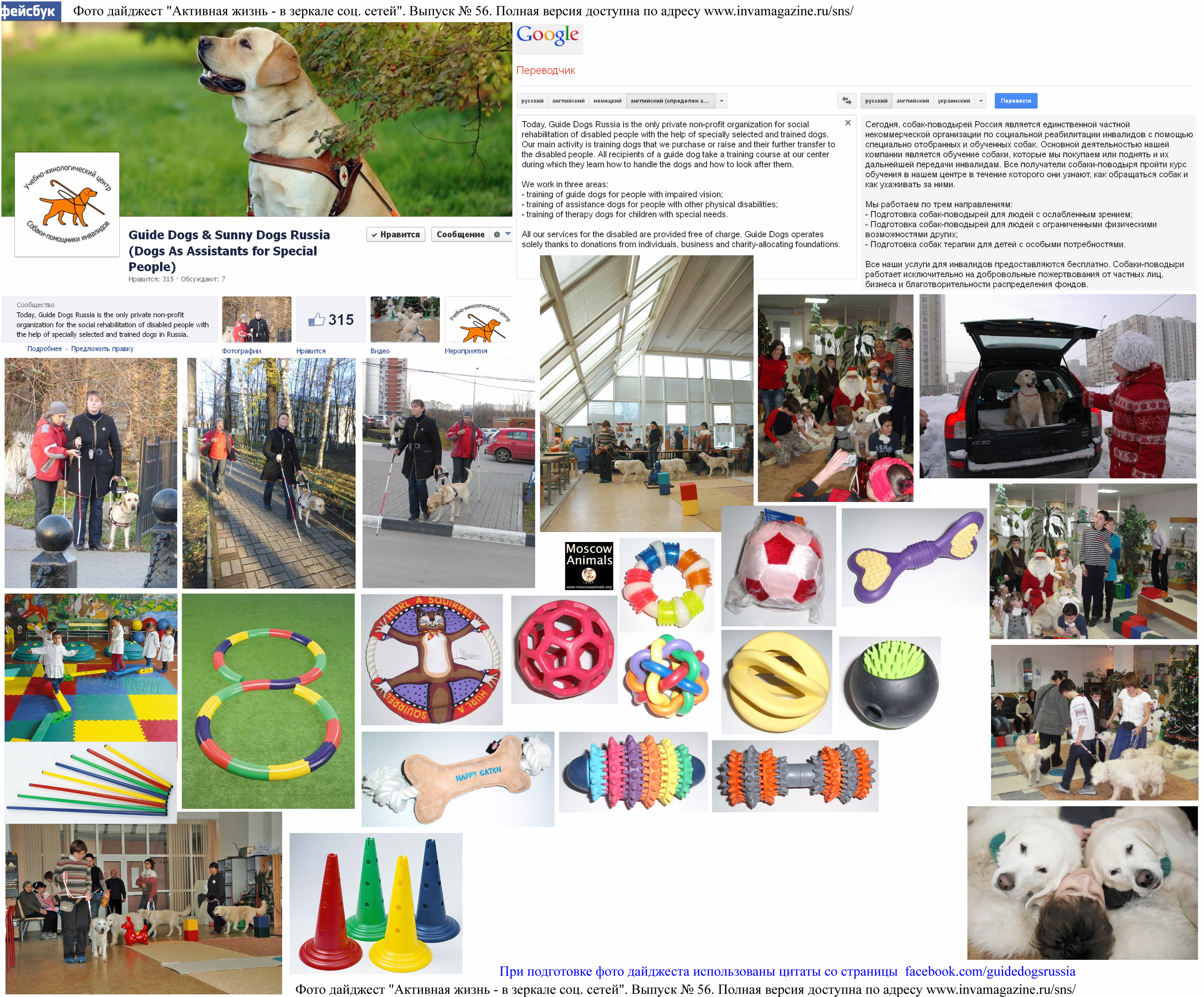 Фото дайджест страницы Guide Dogs & Sunny Dogs Russia (Dogs As Assistants for Special People)