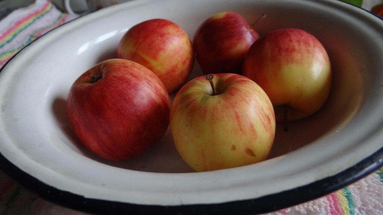 натюрморт. яблоки. still life. apples.