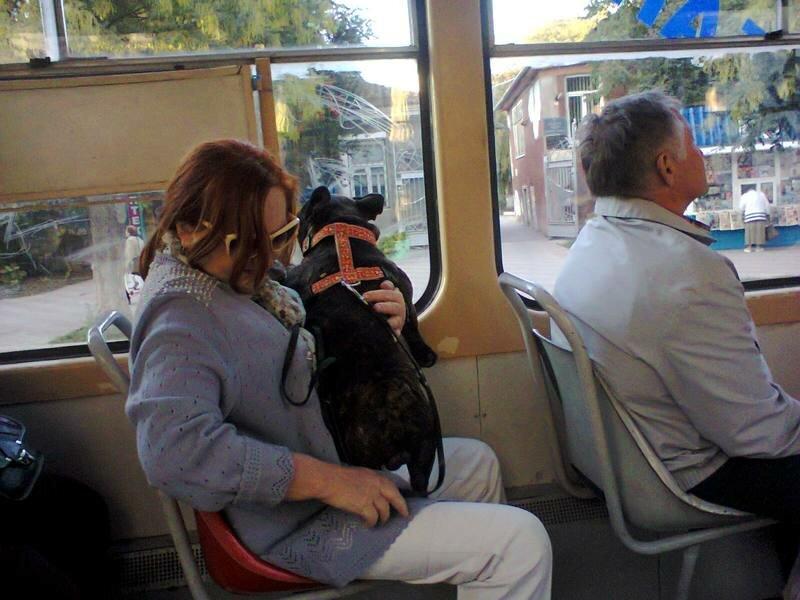 собака, прикол, любовь к животным, мой масенький, мимими