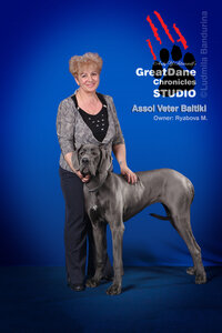 Great Dane Chronicles Studio on «Meg's Cup» Speciality Show, 04.05.2013