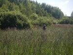 партизаны в болотах