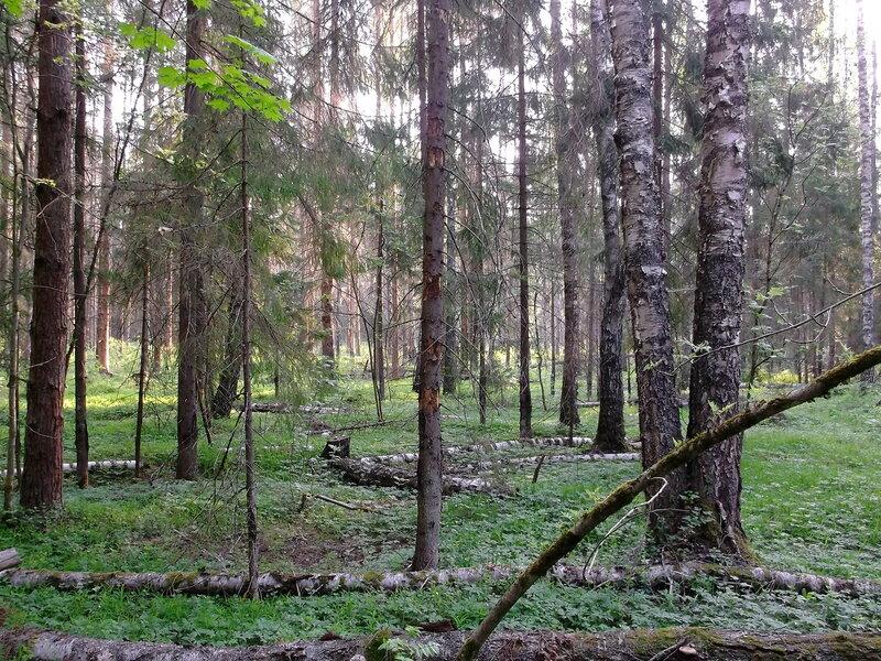http://img-fotki.yandex.ru/get/6704/79794478.42/0_917ad_a0f1b684_XL.jpg