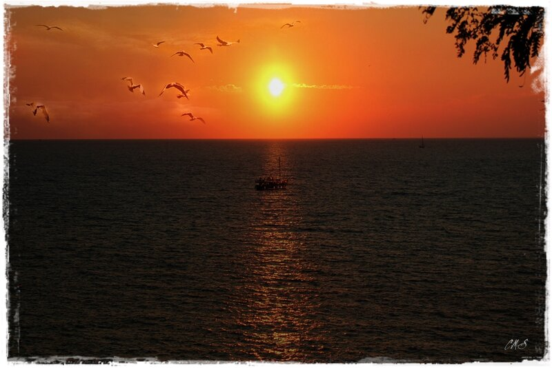 Море,закат,чайки.