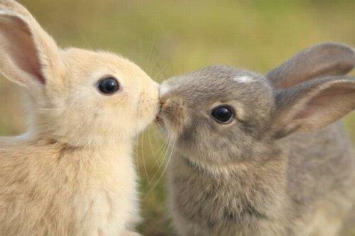 Кроляки-целоваки.jpg