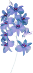 MRD_EggStraSE_blue flowers.png