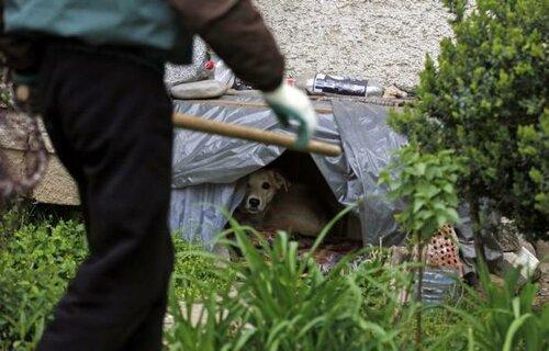 ловля собак екатеринбург