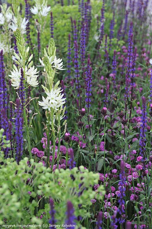 The RHS Greening Grey Britain Garden (36).jpg