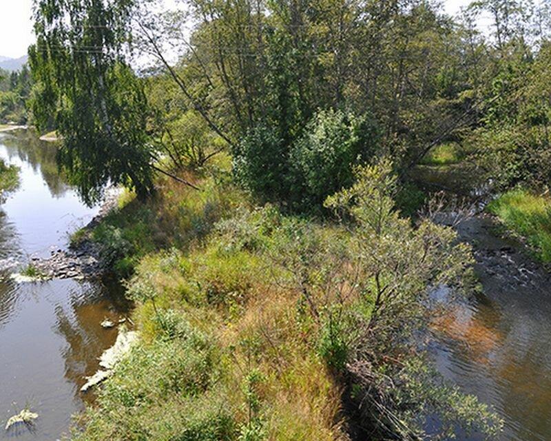 Природа на берегах Миасса (25.07.2013)