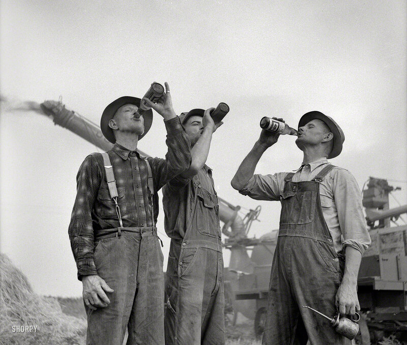 Fall 1941. Jackson, Michigan. Threshing wheat. Farmers drinking beer