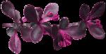 feli_ss_foliage1.png