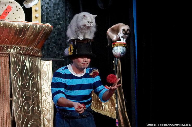 Осень. Театр кошек. ДИНАСТИЯ. 15.10.15.24..jpg