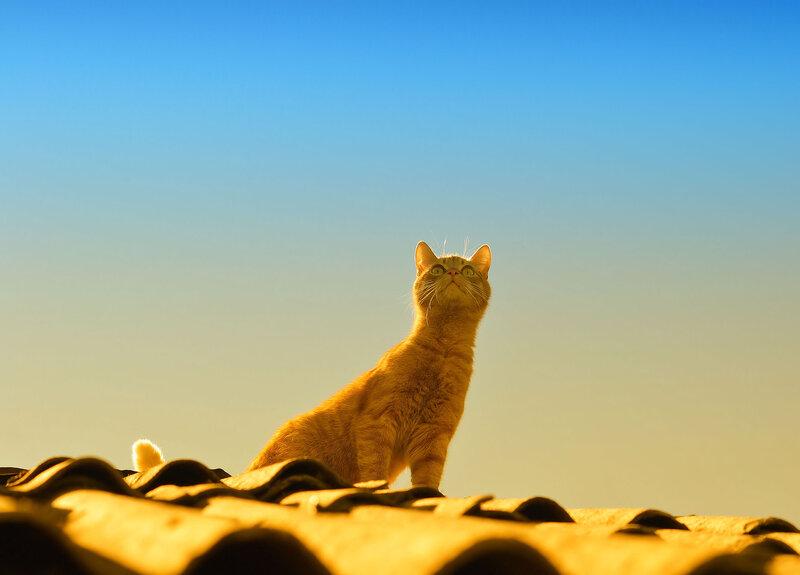 Дикий бродячий кот удивленно рассматривал Небесную кошку.
