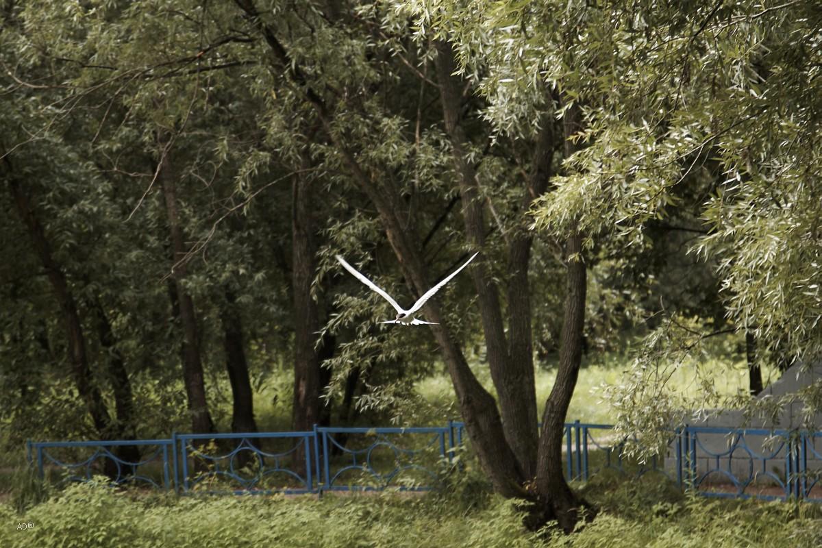Чайки в Парке будущего