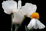 tubeclaudiaviza-flores162.png