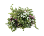 MBW-LaCenerentola-Flowers 1.png