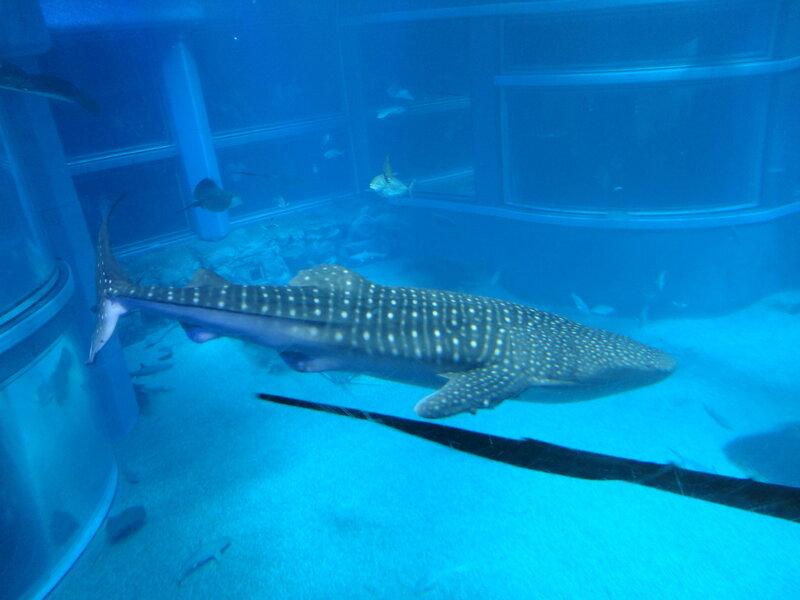 Крупнейший в мире аквариум