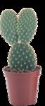 cactus (22).png