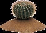cactus (26).png