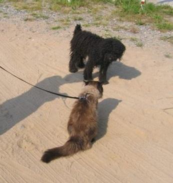 Ластик и собака 2.jpg