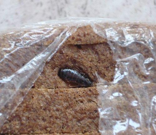 тараканы в хлебе из АТБ