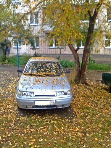 Листья тополя падают с ясеня...