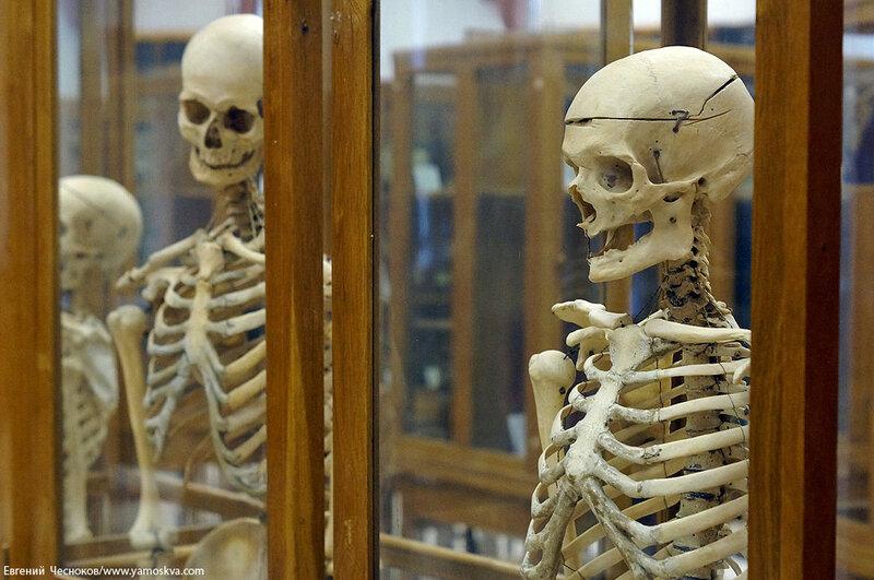 Лето. МГМУ. Музей анатомии. 27.08.15.49..jpg