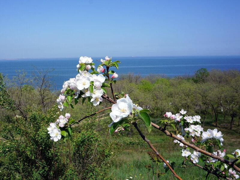 Цветы и море