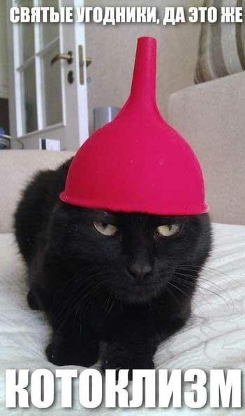 Смешные субботние котики