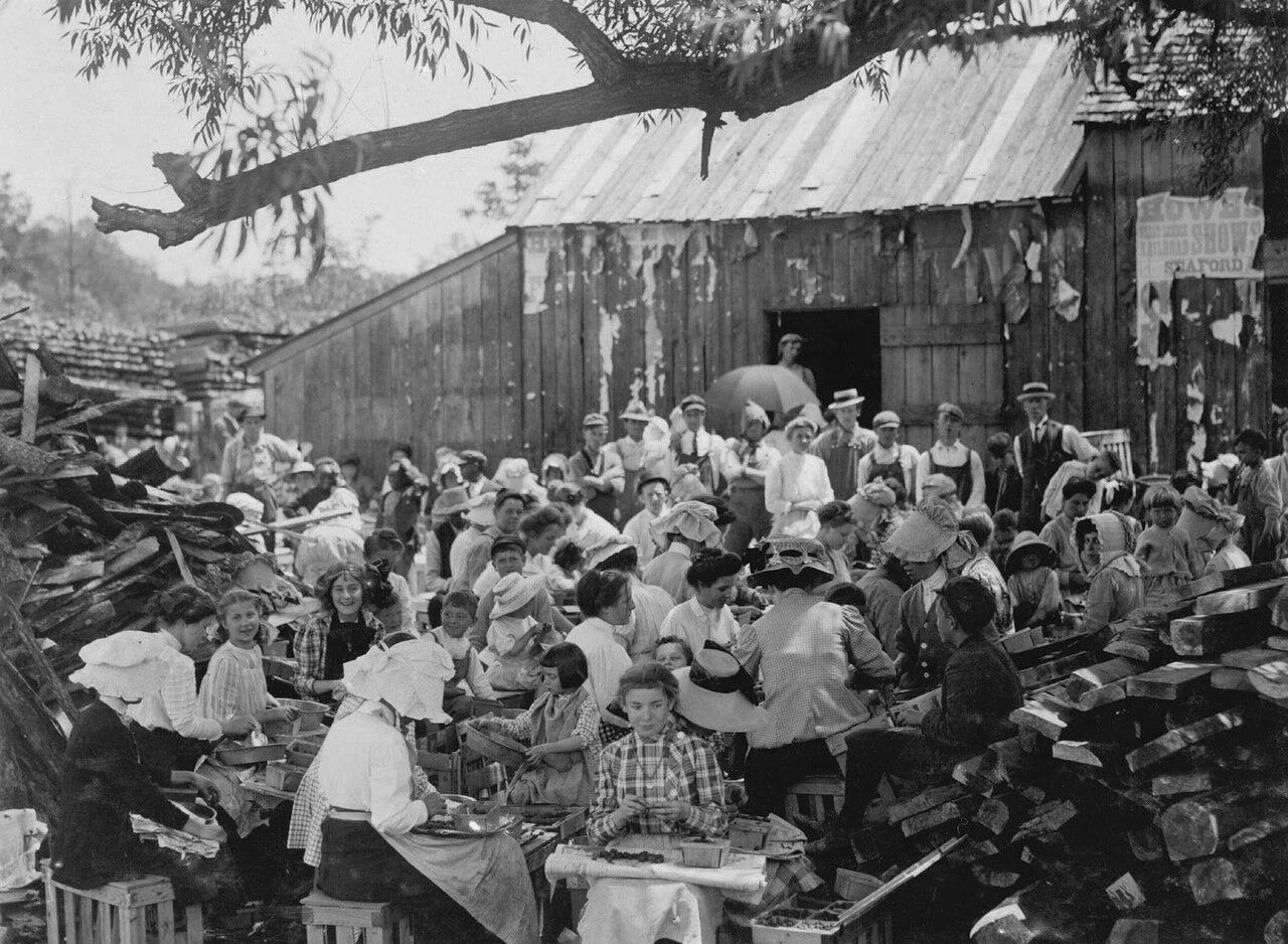 Фабрика по лущению. Сифорд, Делавер, 1910