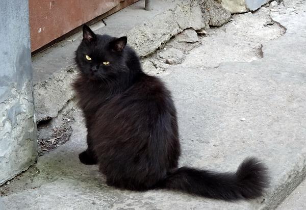 черный кот.jpg