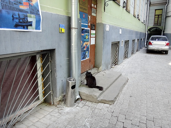 черный кот2.jpg