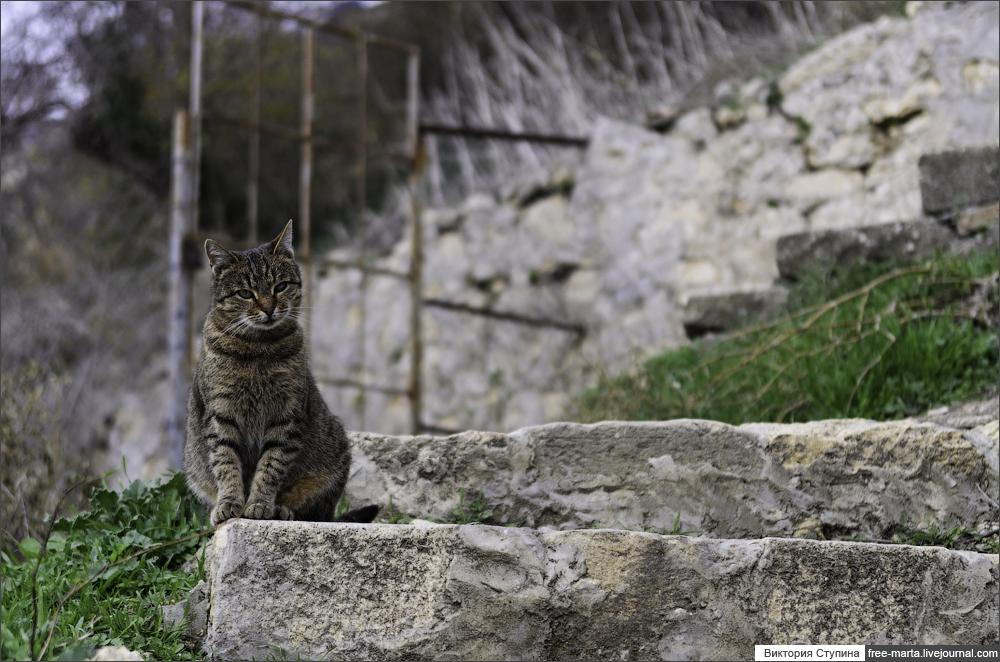 Фиолентовские котики
