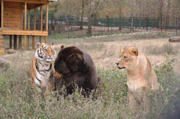 животные дружат