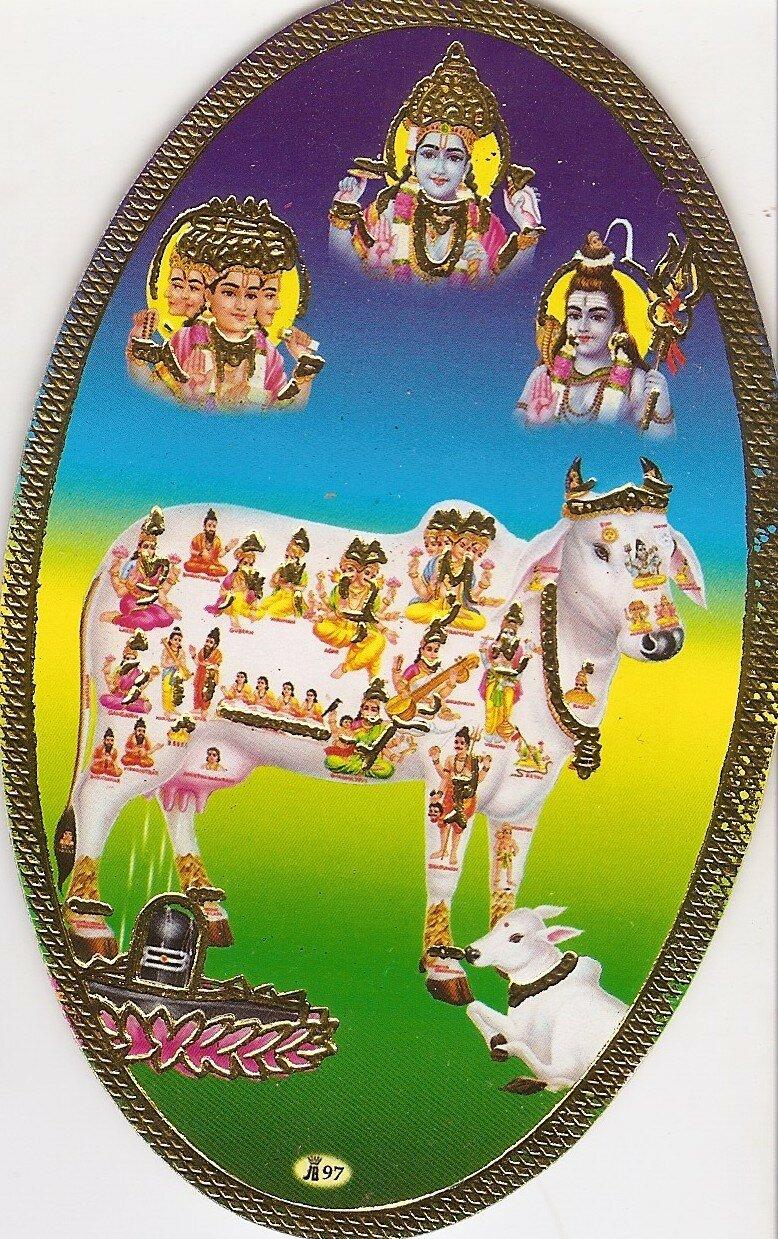 Корова и боги, живущие в ней - Вишну, Брахма, Шива и другие