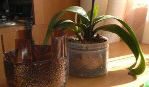 Реанимация орхидей. - Страница 3 0_c6c6c_fec49050_M