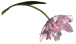feli_ss_pink flower with foliage.png