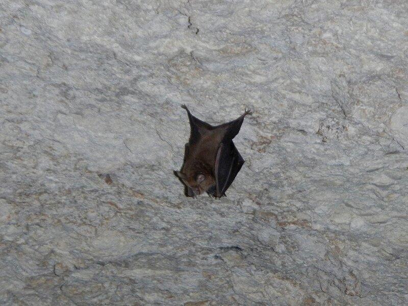 Летучая мышь на потолке пещеры