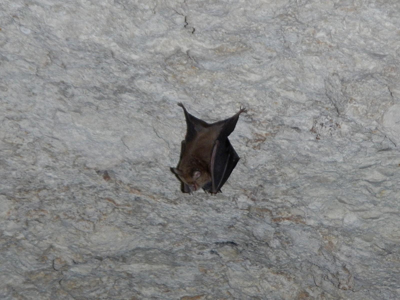 Фото ящерица на камне