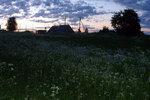 Одуванчиковая поляна в белую ночь